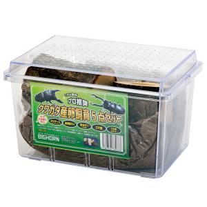 クワガタ産卵飼育 5点セット 関東当日便|chanet