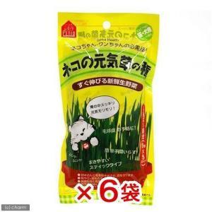 ペティオ ネコの元気草の種 15g×5本入 猫草 6袋入り 関東当日便|chanet