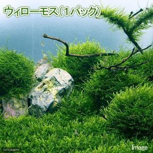 レイアウト水槽からビーシュリンプ水槽まで幅広い使い方が可能な水草です!ウィローモスを活着させた石や、...