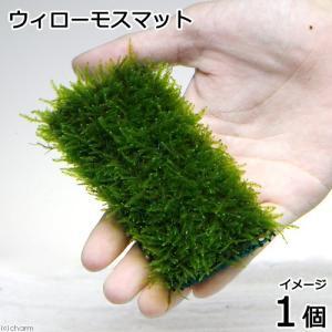 (水草)育成済 ウィローモスマット(無農薬)(1個) 北海道航空便要保温