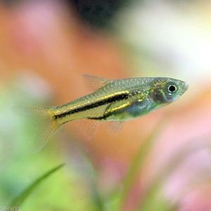 メーカー:■25〜30 メーカー品番: _aqua fish_database 熱帯魚・エビ他 コイ...