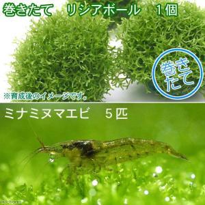 (水草)巻きたて リシアボール(無農薬)(1個) +ミナミヌマエビ(5匹) 北海道航空便要保温|chanet