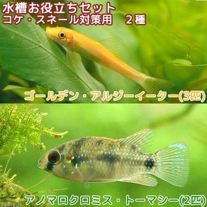 (熱帯魚)水槽お役立ちセット コケ・スネール対策用 2種(5匹)北海道・九州・沖縄航空便要保温