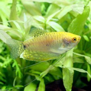 メーカー:■25〜30 メーカー品番: muryotassei_800_899 _aqua fish...