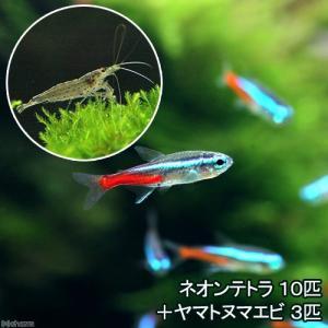 (熱帯魚)ネオンテトラ(10匹) +ヤマトヌマエビ(3匹) 北海道・九州・沖縄航空便要保温