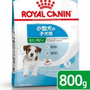 ロイヤルカナン SHN ミニ ジュニア 子犬用 800g 正規品 3182550792929 お一人様5点限り 関東当日便