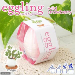 エッグリング ワイルドストロベリー 家庭菜園 キッチン菜園 室内園芸