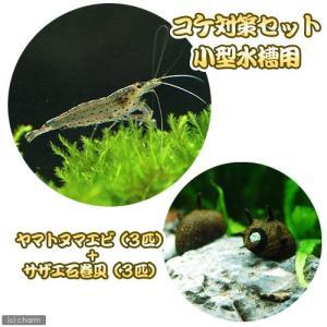 (エビ・貝)コケ対策セット 小型水槽用 ヤマトヌマエビ(3匹) + サザエ石巻貝(3匹) 北海道・九...