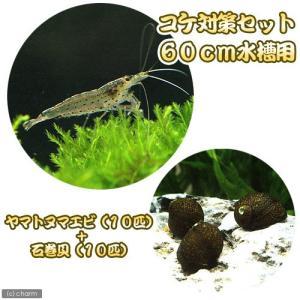 (エビ・貝)コケ対策セット 60cm水槽用 ヤマトヌマエビ(10匹) + 石巻貝(10匹) 北海道・九州航空便要保温
