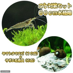 (エビ・貝)コケ対策セット 60cm水槽用 ヤマトヌマエビ(10匹) + サザエ石巻貝(6匹) 北海...