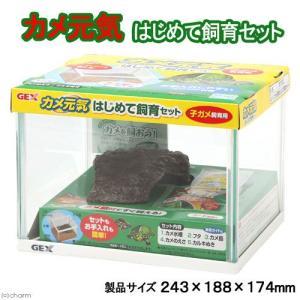 メーカー:ジェックス メーカー品番:027672 ybrand_code GEX 亀・爬虫類 水棲ガ...