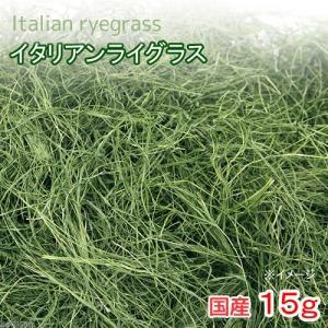 平成30年産 国産 イタリアンライグラス 15g 無添加 無着色 小動物のおやつ 関東当日便|chanet