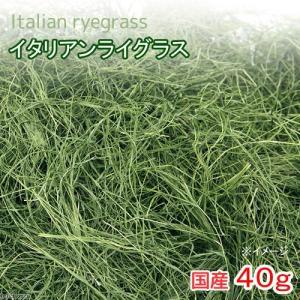 平成30年産 国産 イタリアンライグラス 40g 無添加 無着色 小動物のおやつ 関東当日便|chanet
