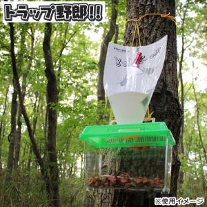 ミタニ トラップ野郎 カブト虫 クワガタ虫 昆虫採集 関東当日便|chanet