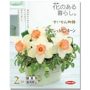 (観葉植物)スイセン球根 花のある暮らし。 〜すいせん物語〜 ティクレットピンキーン 2球詰(1袋)|chanet