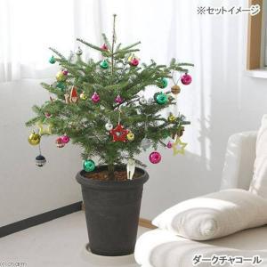 (観葉)もみの木とオーナメント20個・アンティーク調樹脂ポット(ダークチャコール)のお買い得セット おまけ付き 2個口送料無料 沖縄別途送料|chanet