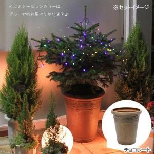 (観葉植物)本物のもみの木とソーラーイルミネーションライト・アンティーク調樹脂ポット(チョコレート)セット 2個口送料無料 沖縄別途送料 chanet