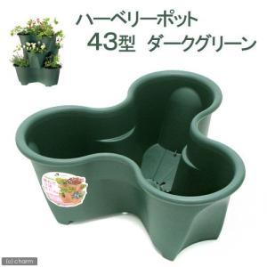 リッチェル ハーベリーポット 43型 ダークグリーン 家庭菜園 いちご ストロベリーポット ハーブ ...