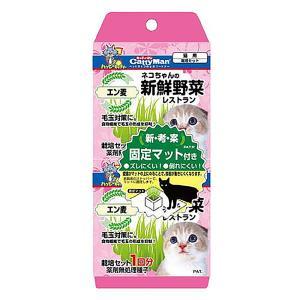 キャティーマン ネコちゃんの新鮮野菜 レストラン 2個パック 猫用 栽培セット 関東当日便|chanet