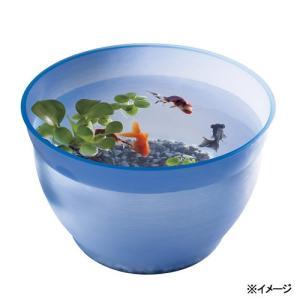 スドー 金魚の小鉢 るり(瑠璃) 金魚鉢 関東当日便