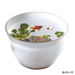 スドー 金魚の小鉢 しらゆき(白雪) 金魚鉢 関東当日便