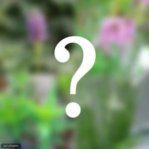 (ビオトープ/水辺植物)ビオトープビギナーセット 水辺植物4種類