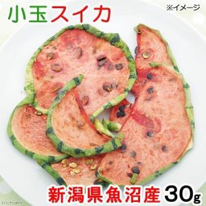 新潟県魚沼産 小玉スイカ 30g 国産 小動物用のおやつ