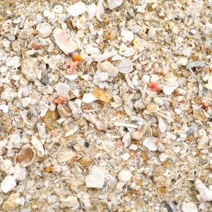 メーカー:CPFarm サンゴ水槽に理想的な沖縄海底アラゴナイトサンドです。 沖縄本島、瀬底沖の海底...