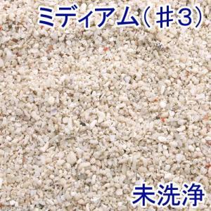 未洗浄 サンゴ砂 ミディアム(#3) 1L 海水水槽用底砂|チャーム charm PayPayモール店