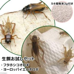 ぴったりの生餌を見つけよう!カキ殻粉末付き!爬虫類や両生類、大型魚の代表的な生餌であるコオロギ。この...