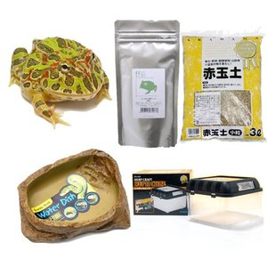 愛らしい姿で大人気のツノガエルの飼育セット! ベルツノガエルの飼育を始めるのに必要な基本的な器具と生...