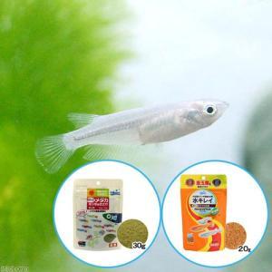 メーカー:用品+生体植物セット メーカー品番: _aqua Oryzias latipes var....