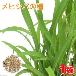 メヒシバの種(1袋)猫草 うさぎ 犬 猫 おやつ 種子 関東当日便|chanet