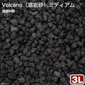無地パッケージ Volcano(溶岩砂)ミディアム 3リットル(30cm水槽用) お一人様6点限り 関東当日便|chanet