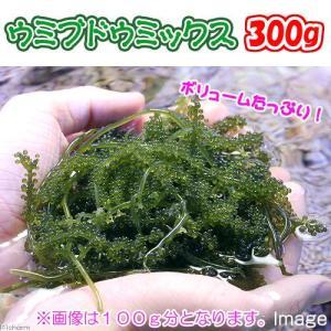 (海水魚 海藻)生餌 ウミブドウミックス グラム売り 300...