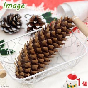 長野県産 長い松ぼっくり 1個 クリスマス 関東当日便|chanet