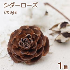 シダーローズ(ヒマラヤ杉の実)1個 クリスマス 木の実 関東当日便|chanet