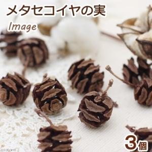 メタセコイヤの実 3個 クリスマス 木の実 関東当日便|chanet