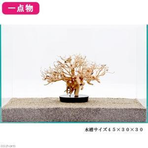 一点物 台座付き盆栽流木 45cm水槽用 212749 関東当日便