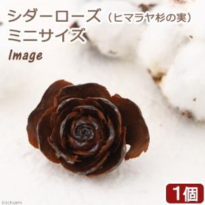 シダーローズ(ヒマラヤ杉の実) ミニサイズ 1個 クリスマス 木の実 関東当日便|chanet
