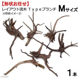 形状お任せ レイアウト流木 Typeブランチ Mサイズ(20〜30cm) 1本 関東当日便