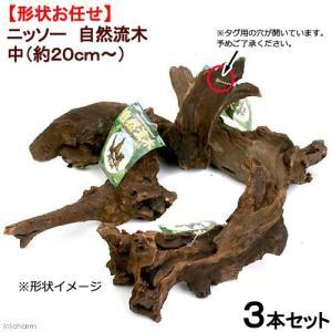 形状お任せ 自然流木 中(約20cm〜) 3本セット 関東当日便|chanet