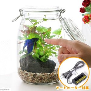 (熱帯魚 水草)ベタの飼育セット 私の小さなアクアリウム 〜ベタと水草の共演〜 1セット 説明書付き 本州・四国限定|chanet