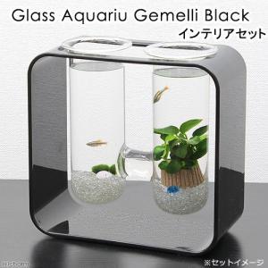(熱帯魚)グラスアクアリウム ジェメリ ブラック インテリアセット 本州・四国限定|chanet