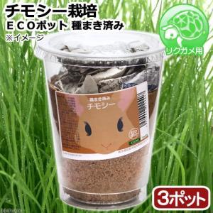 (観葉植物)種まき済み チモシー栽培 ECOポット 3ポット リクガメ用 カメ 餌|chanet