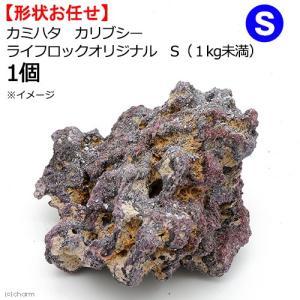 カミハタ カリブシー ライフロックオリジナル S(1kg未満) 1個 形状おまかせ 関東当日便