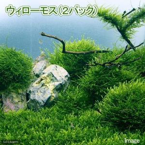 メーカー:草■0〜30 メーカー品番:【約6g】 熱帯魚 mzks_winter01 水草 ビバリウ...