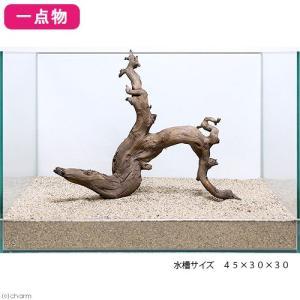 一点物 上質流木 雅 45cm水槽用 227778 関東当日便