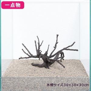 30cm水槽にぴったりの流木 一点物 極上流木(単体) 30cm水槽用 特長 ●30cmクラスの水槽...