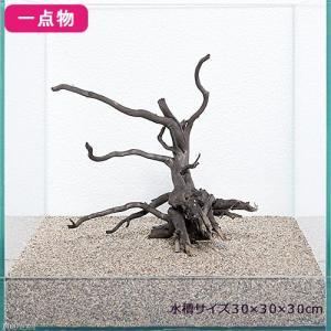 ※ご購入前に注意※   こちらの流木は沈みづらい流木です。 沈下するまでにお時間がかかる場合が...